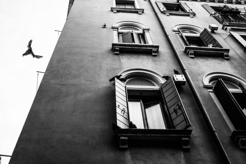 Vol d'oiseau, Venise - photographie numérique, 2014